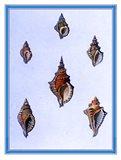 Shells-3 of 4 Art Print