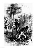Slaves Working on a Plantation Art Print