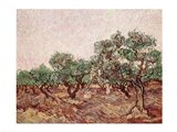 The Olive Pickers - picking Art Print