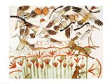 Fishing and fowling in the marshes, detail of the birds, from the Tomb Chapel of Menna Art Print