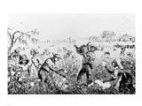 Picking Cotton on a Southern Plantation Art Print