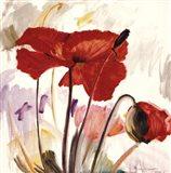Crimson Poppy 2 Art Print