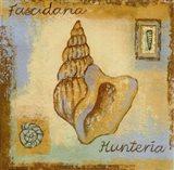 Fascidaria Hunteria Art Print