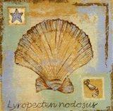Lyropecten Nodosus Art Print