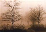 Foggy Walk Art Print