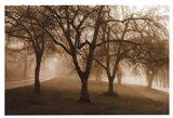 Misty Park Art Print