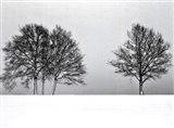 Winter Tree Line II Art Print