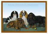 King Charles Spaniels Art Print