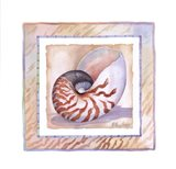 Bordered Shell-Nautilus Art Print