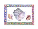 Turbo Conch & Harp Shells Art Print
