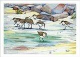 Shoreline Sandpipers Art Print