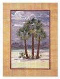 Mediterranean Fan Palm Art Print
