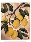 Italian Harvest - Lemons Art Print