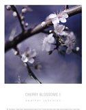 Cherry Blossoms I Art Print