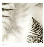 Ferns No. 2 Art Print