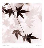 Japanese Maple Leaves No. 1 Art Print