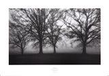 Fog Tree Study IV Art Print