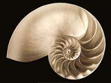 Ocean Keepsake II Art Print