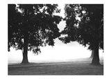 Fog in the Park II Art Print