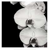 Orchid Portrait II Art Print