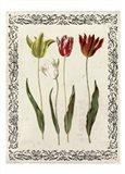 Spring Blooms I Art Print