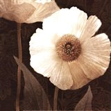 Paisley Poppy II Art Print