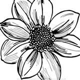 Floral Outlines I Art Print