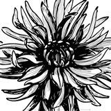 Floral Outlines II Art Print