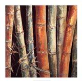 Caribbean Bamboo I Art Print