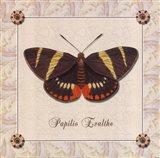 Papilio Evalthe II Art Print