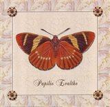 Papilio Evalthe I Art Print