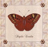 Papilio Cocalia Art Print