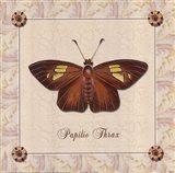 Papilio Thrax Art Print