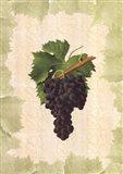 Antique Grapes - Aspiran Art Print