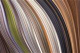 Windswept 3 Art Print