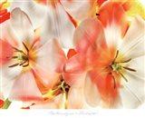 Tulips 1 Art Print