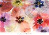 Nature's Palette Art Print