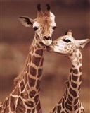 Giraffe First Love Art Print