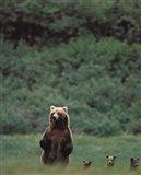 Grizzlies Art Print