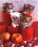 Cats and Cherry Art Print