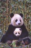 Panda And Baby Art Print