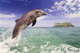 Dolphin Leaping Art Print
