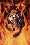 Bengal Tiger Jumping Flames Art Print