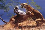 Tigers Fighting Art Print