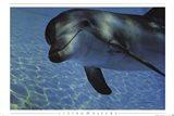 Dolphin Underwater Art Print