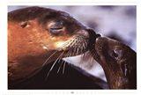 Seals Art Print