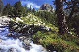 Mountain Creek Art Print