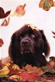 Dog in Leaves Art Print