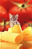 Kitten On Pasta Art Print