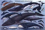 Whales And Dolphins Art Print